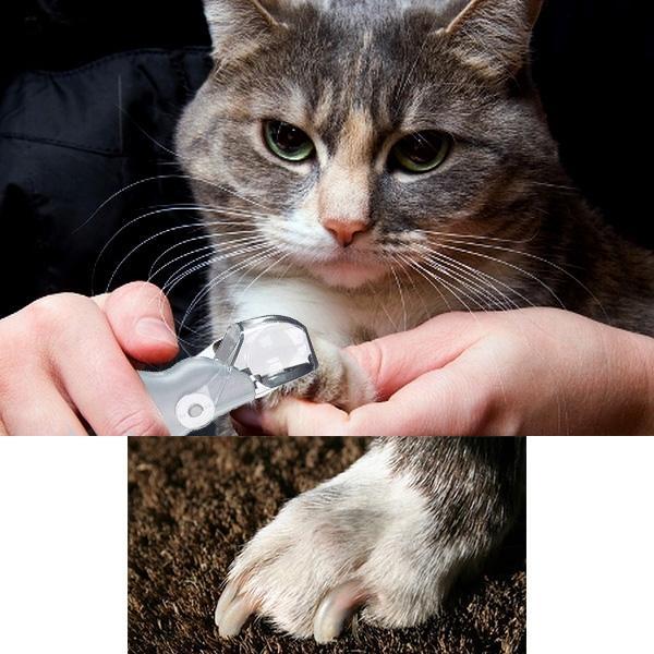 ščipalec krempljev za mačke