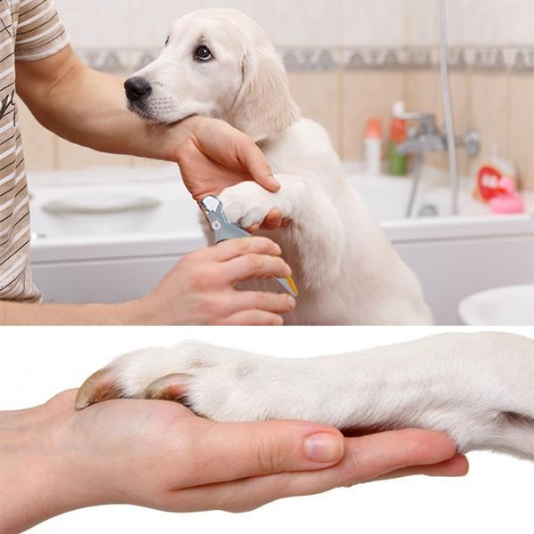 striženje pasjih krempljev