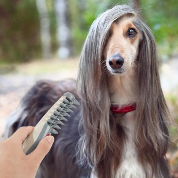 česanje dlak psa