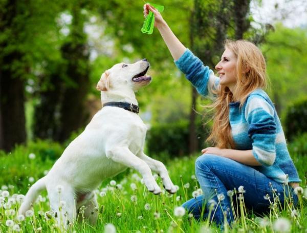ščetkanje pasjih zob med igro